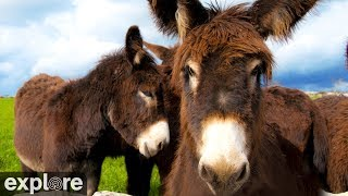 Download Donkey Hill - Service Dog Project powered by EXPLORE.org Video