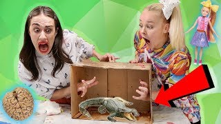 Download WHAT'S IN THE BOX CHALLENGE W/ MIRANDA SINGS!! *live animals* Video