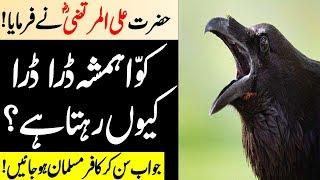 Download Why is House crow always afraid?   Kawa Hamisha Darta Kion Kehta Hai   Malumat tube Video