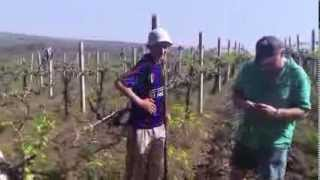 Download Moldova Agricultural Trip 2013 - CEEM Video
