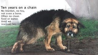 Download 10 Years Chained: A Dog's Rescue Story. She was snowed and sleeted on - covered in mud - no comforts Video