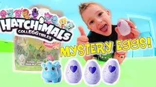 Download Father & Son HATCHIMALS SURPRISE! / Mystery Egg Pack! Video