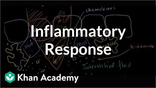 Download Inflammatory Response Video