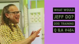 Download Dog pulls on walks | Stop a dog from howling | What Would Jeff Do? Dog Training Q & A #464 Video