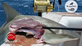 Download Fishing Live - Shark Fishing in Florida ft. BlacktipH. Kanalgratis.se Video