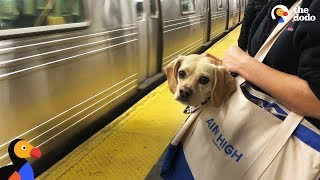 Download NYC Subway Dogs Brighten People's Days | The Dodo Video