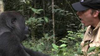 Download Gorilla Reunion: Damian Aspinall's Extraordinary Gorilla Encounter on Gorilla School Video