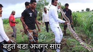 Download Rescue big indian rock python from Ahmednagar maharashtra, india Video