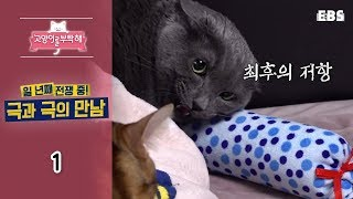 Download 고양이를 부탁해 - 일 년째 전쟁 중! 극과 극의 만남 #001 Video