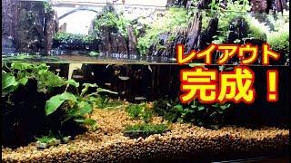 Download レイアウト完成!水槽立ち上げ 【崖レイアウトテラリウム水槽】 Video