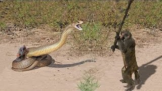 Download 10 CRAZIEST ANIMAL FIGHTS CAUGHT ON CAMERA Video