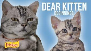 Download Dear Kitten: Beginnings // Presented By BuzzFeed & Friskies Video