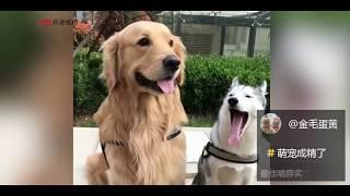 Download 【抖音】成精了成精了! 萌宠合集第六期 Try Not To Laugh Challenge Tik Tok Video