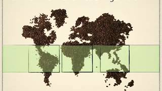 Download How coffee is made Video