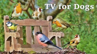 Download Dog Watch TV Spectacular - Videos for Dogs to Watch Garden Birds ✅ Video