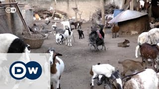 Download Benin's farmers break new ground | Eco-at-Africa Video