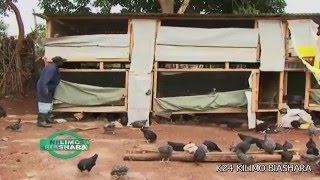 Download Kienyeji Chicken Business: Kilimo Biashara Kenya Video