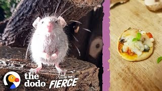 Download Microscopic Baby Mouse Grows Up And Eats Tiny Pizzas | The Dodo Little But Fierce Video