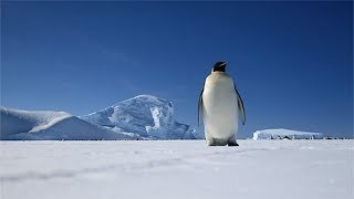 Download 25 Facts About Antarctica That Are So Cool They're Freezing Video