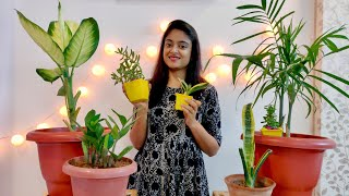 Download New Indoor Plants Collection | Plant Haul India July 2019 with Price, Care, Placing and benefit🌿🌲 Video