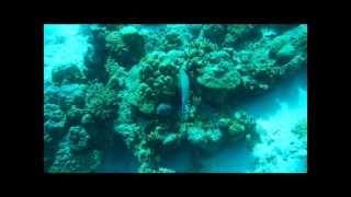 Download 2013 .07.08 ~ 12 Cebu Mactan Island oceanplayerdive Video