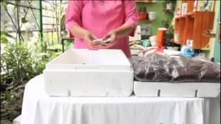 Download Bộ dụng cụ trồng rau sạch tại nhà - trồng rau mầm tại nhà Video