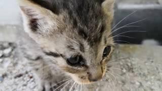 Download 子猫達、遂に地上に現る Video