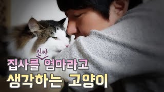 Download 집사를 진짜 엄마라고 생각하는 고양이! My cat thinks I'm his mommy Video