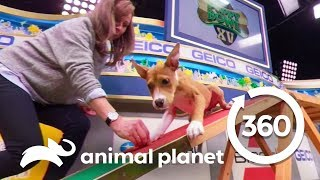 Download Training with Puppies Malibu and Scout | Puppy Bowl XV: Training Camp (360 Video) Video