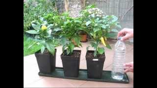 Download DIY self watering system for pot plants part1 (Hydroponics basic) Video
