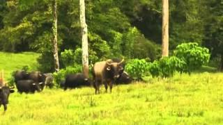 Download GANADERIA 3 X - EN - AL AGRITO DE PUERTA Video
