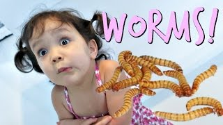 Download Eating Worms- January 19, 2017 ItsJudysLife Vlogs Video