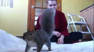 Download Squirrel Playing Video