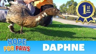 Download Kids can be so... AMAZING! This duck wouldn't have survived without one kid's promise to get help. Video