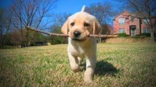 Download Funny Pets 🐶🐱 Funny and Cute Baby Animals (Full) [Funny Pets] Video
