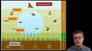 Download Ecosystem Ecology Video