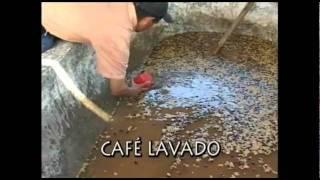 Download Manejo de la Calidad del Beneficiado Húmedo del Café.wmv Video