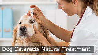 Download Dog Cataracts Natural Treatment - MUST SEE Dog Cataract Video Video