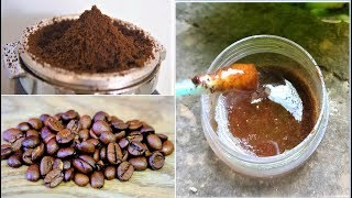 Download i Apply Coffee on my skin & look what happened, Coffee Face Mask & Coffee Scrub for Skin, Cellulite Video