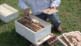 Download Bee Inspection one week after in installing NUC (full) Video