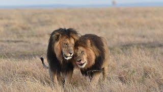 Download Maasai Mara Safari   Day 3 Video