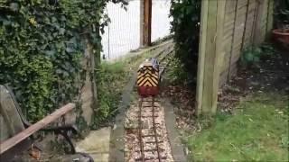 Download ride on train track in garden 5″ gauge Baldwin 242 steam locomotive Lynton and Barnstable 762 Video