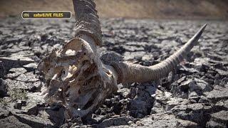 Download The Djuma Drought Video