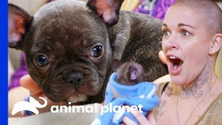 Download Amanda Finds The Perfect New Home For This Adorable Puppy | Amanda To The Rescue Video