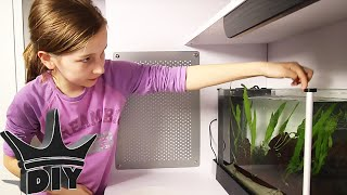 Download HER FIRST AQUARIUM - aquascaping and stocking Video