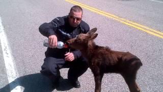 Download bikers and baby moose Video