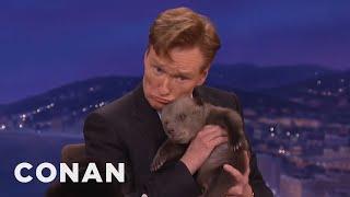 Download Animal Expert David Mizejewski: Black Bear & Brown Bear Cubs - CONAN on TBS Video