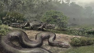 Download World's BIGGEST Snake ever, Titanoboa Video