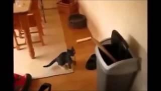 Download Gatos Chistes Videos De Risa Guerra De Chistes Videos Chistosos Videos Graciosos Video