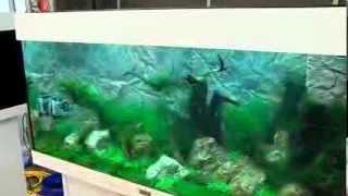Download zookauf Aquarien-Einrichtungs-Meisterschaft: Der Film zum Wettbewerb Video